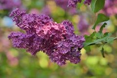 10混合开花的分行包含eps丁香透明模式的对象 库存照片