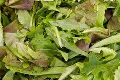 混合沙拉 免版税库存照片