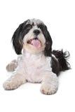 混合的品种狗 免版税库存图片