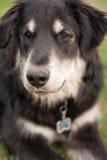 混合的品种狗 库存图片