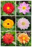 混合的收集五颜六色的花 免版税库存图片