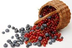混合的浆果 免版税库存图片