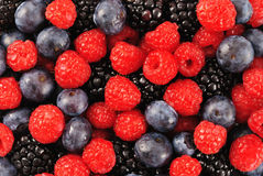 混合的浆果 免版税图库摄影