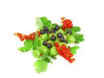 混合红色的浆果,黑醋栗,与叶子。查出。 库存图片