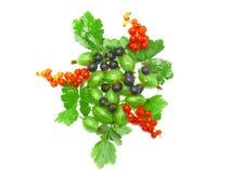 混合红色的浆果,黑醋栗,与叶子。查出。 免版税库存图片