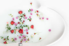 混合花瓣和叶子在牛奶浴、背景或者纹理按摩和温泉的,放松 库存图片