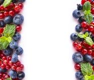 混合莓果和果子在图象边界与文本的拷贝空间 与薄荷叶的成熟蓝莓,红色和黑醋栗在w 库存照片