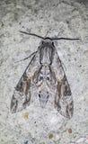 混和在环境里的飞蛾的特写镜头 免版税库存照片