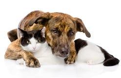混杂的一起说谎品种的狗和猫 隔绝在白色backgr 免版税库存照片