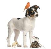 混杂的品种小狗、金丝雀、小鸡、乌龟和汇率 库存图片