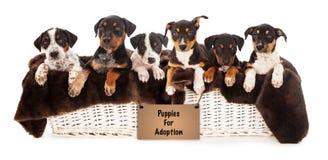 混杂的品种小狗篮子  免版税库存照片
