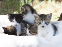 混杂的品种小猫 库存图片
