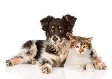 混杂的品种狗和拥抱逗人喜爱的猫 在白色backgrou 库存照片
