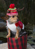 混杂的品种狗外形在篮子佩带的驯鹿帽子的 库存图片