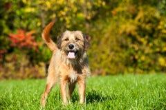 混杂的品种狗 免版税图库摄影