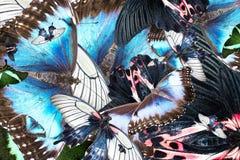 从混杂的多彩多姿的蝴蝶的背景 免版税库存图片