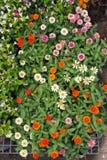 混杂的小花在市场上 免版税库存图片