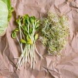 混杂的有机微绿色和圆白菜在工艺纸 紫花苜蓿微绿色新芽新鲜的向日葵和堆  健康 免版税库存图片