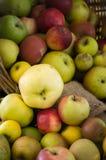 混杂的有机苹果英国英国 免版税库存照片