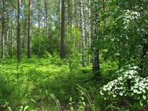 混杂的森林。夏天风景 免版税库存照片