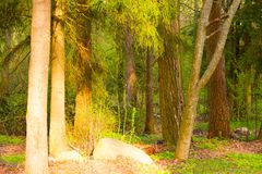 混杂的森林在早期的春天 免版税库存照片