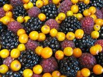 混杂的浆果 免版税库存照片