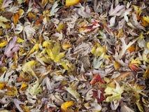 混杂的秋叶 库存图片
