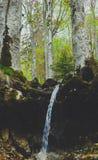 混杂的绿树林森林,生苔树根源棍子出于groun 库存图片