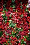 混杂的花的布置 五颜六色的mixe花束花 图库摄影