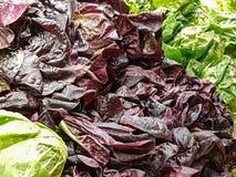 混杂的莴苣和圆白菜在显示在地方市场上 免版税库存照片