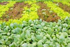 混杂的菜园 免版税库存照片