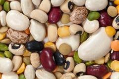 混杂的豆 免版税库存图片