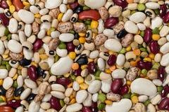 混杂的豆 免版税库存照片