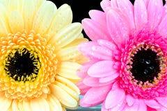 混杂的雏菊花 库存图片