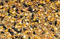 混杂的ceareals和种子-鸡食物 免版税图库摄影