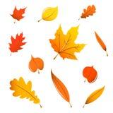混杂秋天叶子 库存照片