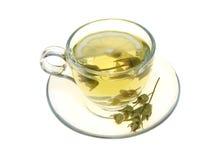 清凉茶、在白色背景和柠檬切片隔绝的贤哲叶子 库存照片