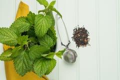 清凉茶用蜜蜂花 库存照片