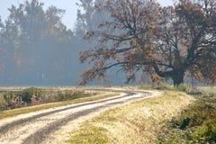 清早农村路在秋天 库存图片