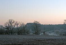 清早在11月底 杉木森林在Uzdensky区Neman Ri的米斯克地区第一霜起源 图库摄影