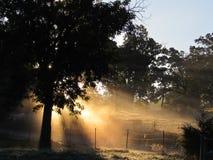 清早太阳光芒通过有雾的草甸 库存照片