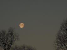 清早月亮 免版税库存图片