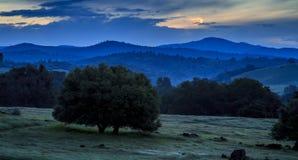 清早树、山麓小丘和山 免版税库存照片