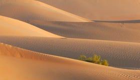 清早沙漠沙丘纹理 免版税库存图片