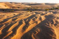 清早沙漠 库存照片
