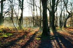 清早秋天薄雾在一个空的森林里上升 免版税图库摄影