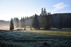 清早薄雾、草甸和森林 图库摄影