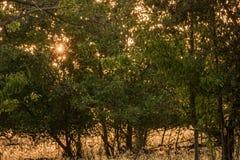 清早通过事假看的秋天阳光金黄星  免版税库存图片