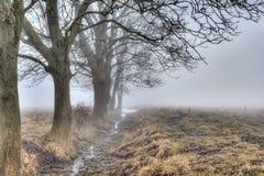 清早雾和树 免版税库存图片