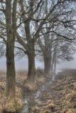 清早雾和树 库存照片